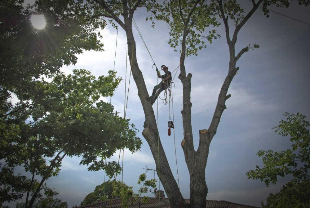 alpinistyczna wycinka drzew łódź